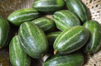 Pointed-Gourd Benefits: परवल खाएं, इम्यूनिटी बढ़ाएं
