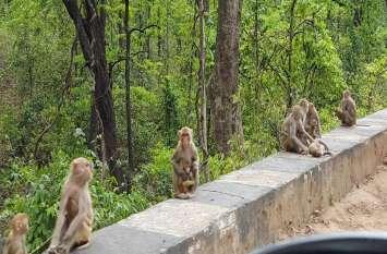 चर्चा में वन विभाग की अपील, लोगो से कहा कि बंदरों व अन्य वन्य प्राणियों को न दें खाने-पीने की चीजें
