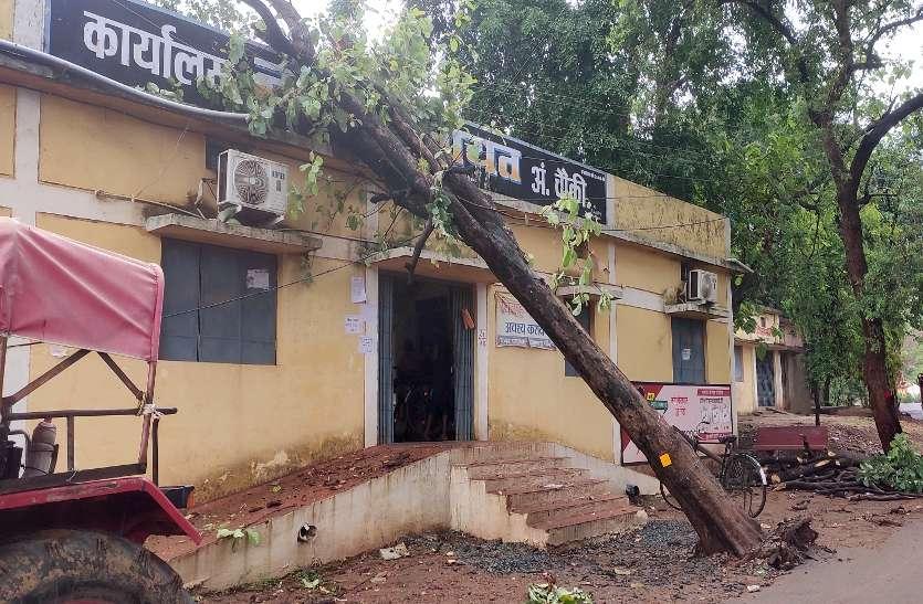 झमाझम बारिश से गिरी स्कूल के बाउंड्री की दीवार और सरकारी कार्यालय में गिरा सालों पुराना पेड़ ...