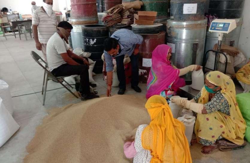 कोरोना इफेक्ट: 30 क्विं कम हुआ उत्पादन, किसानों को नहीं मिल रहे बाजरा के बीज
