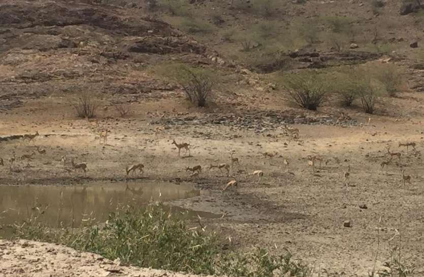 अब हजारों वन्यजीवों की प्यास बुझाएगा बनड़ा तालाब