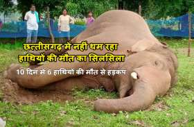 छत्तीसगढ़ में फिर मिला हाथी का मिला शव, 10 दिन में 6 हाथियों की मौत से हड़कंप