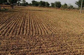 सूर्य के ताप का कहर, इन फसलों पर संकट