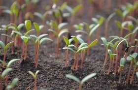 32 लाख पौधे बदलेंगे सुलतानपुर की आबोहवा