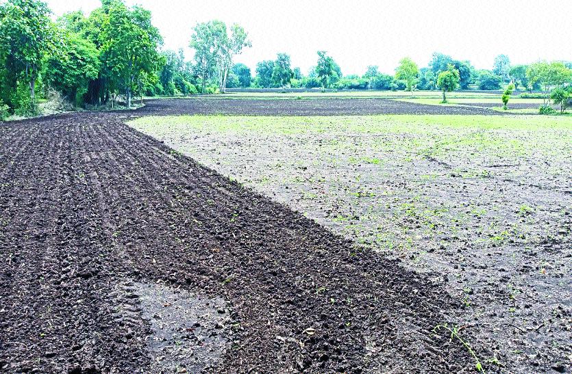 अब बरसाती मूंग की ओर भी बढ़ा क्षेत्र के किसानों का रुझान
