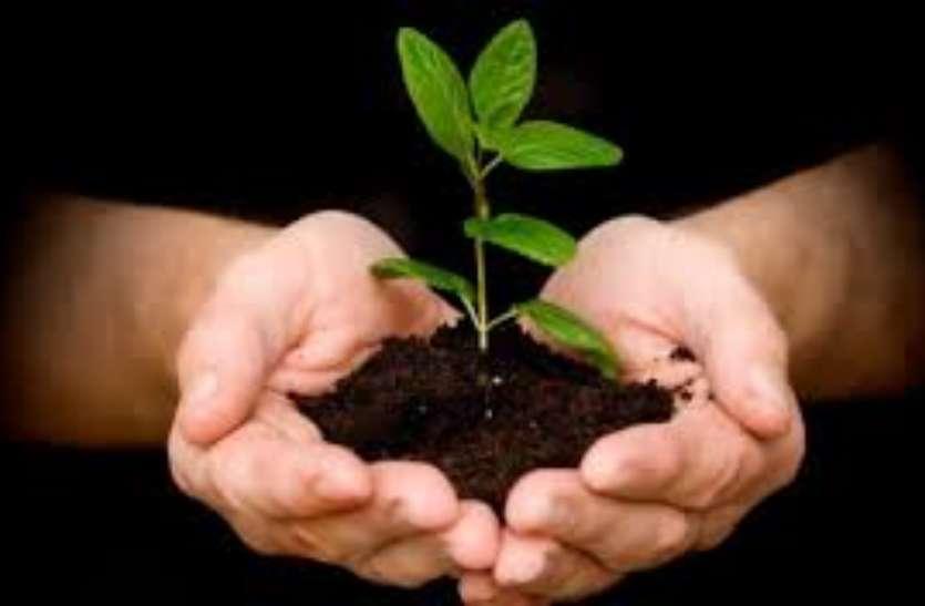 इस नंबर पर करें कॉल, वन विभाग आपके घर फ्री में दे जाएगा 5 पौधे