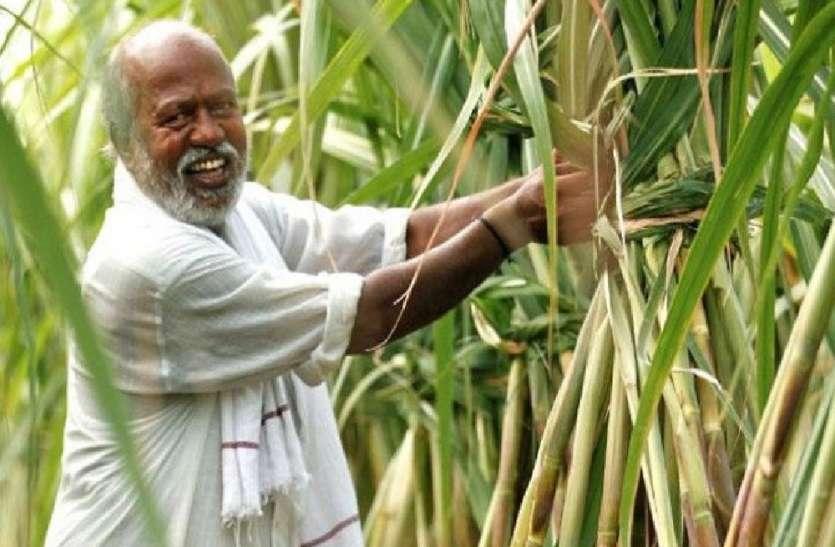 गन्ना किसानों का 73 फीसदी भुगतान कर इस जिले ने बनाया रिकार्ड, यूपी में दूसरे स्थान पर पहुंचा