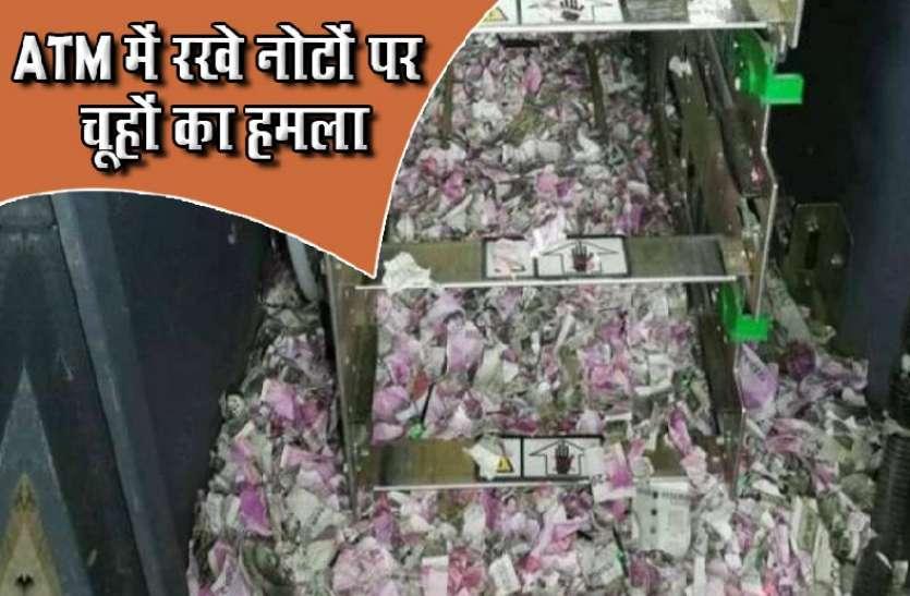 ATM में रखें 12 लाख रुपए के नोट कुतर गए चूहे, वायरल हुईं तस्वीरें तो सामने आई हकीकत