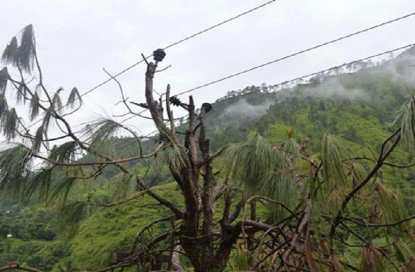 बिजली विभाग के दाव-पेंच में उलझा पूर्व सीएम का गांव, पेड़ में तार बांध हो रही विद्युत आपूर्ति