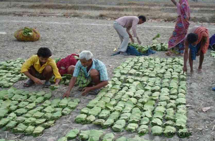सुकमा, दंतेवाड़ा और बीजापुर में तेंदूपत्ता संग्राहकों को होगा नकद भुगतान, उद्योग मंत्री लखमा के पत्र पर मुख्यमंत्री ने दी सहमति
