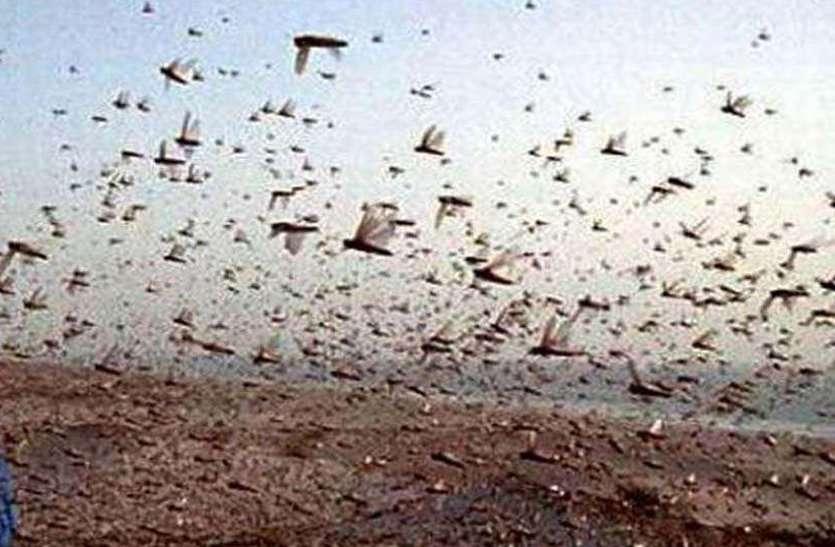 Tiddi Dal Attack : Locust Swarm Attack in gwalior