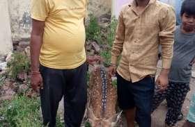 हिरण पर श्वान का हमला, लोगों ने बचाई जाान