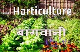 सुहागनगरी में बढ़ेगा बागवानी का रक्वा, सब्सिडी पाने के लिए करना होगा यह काम