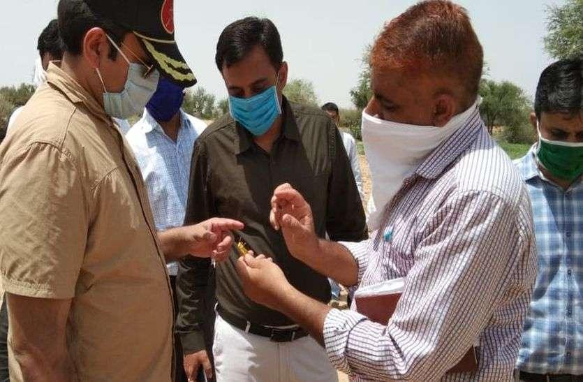 रामसरा के टिड्डी प्रभावित खेतों में पहुंचे कलक्टर