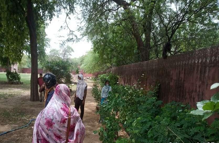 Jaipur : जेडीए ने पहले दिन बांटे 39 हजार पौधे