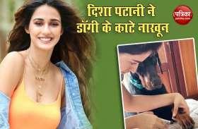 Disha Patani ने जब काट डाले अपने डॉगी के नाखून, Video हुआ वायरल