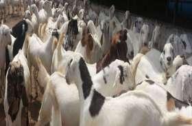 रुपए कमाने के लिए चुराई बकरों से भरी दो जीप, दो युवक गिरफ्तार