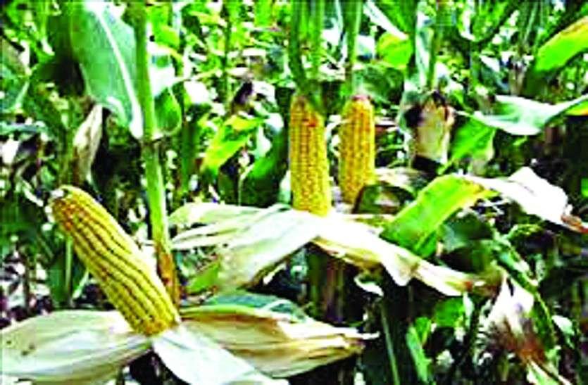 मुरैना में 11 करोड़ की लागत से स्थापित होगी किसान उत्पादक कंपनी