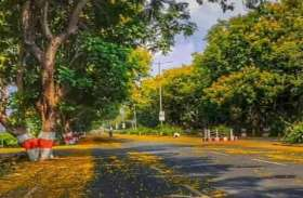 हरित प्रदेश-वन होम-वन ट्री कैम्पेन, हरियाली का दायरा बढ़ाने 5 लाख घरों में रोपे जाएंगे पौधे
