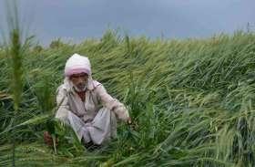 20 हजार किसान फसल बीमा योजना से बाहर