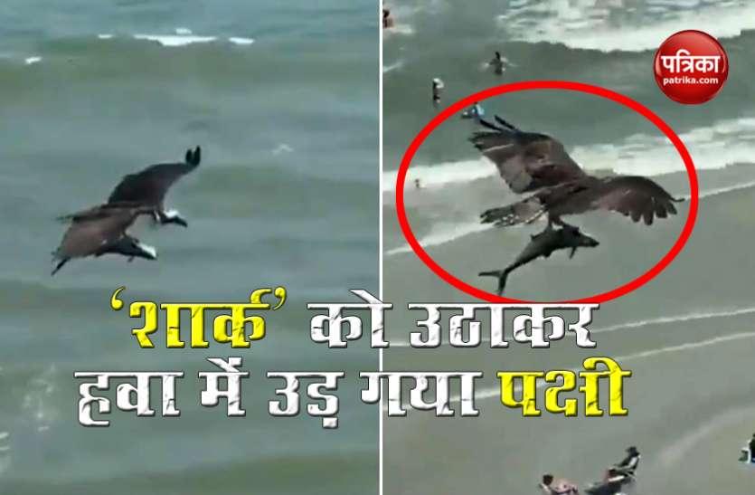 'शार्क' को समुद्र से उठाकर हवा में उड़ा ले गया खतरनाक पक्षी, Video देख सन्न रह गए लोग !
