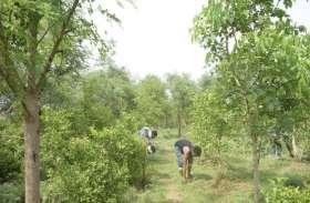 इस गांव के युवाओं ने बंजर जमीन पर पेड़ लगाकर कमाए हजारों रुपए, रंग लाई जहां सोच वहां हरियाली की मुहिम