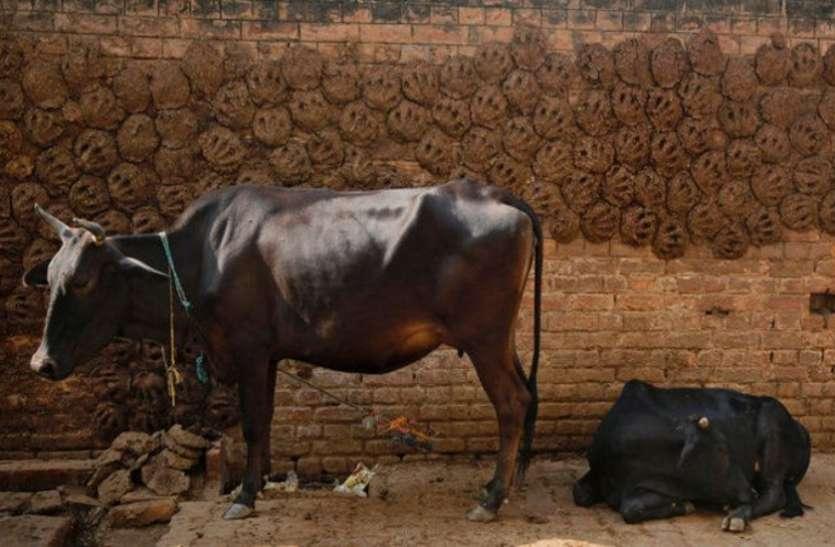 वाहनों में सस्ते ईंधन के लिए आ सकती है गाय के गोबर की सीएनजी: कामधेनु आयोग