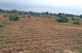 वनविभाग की हजारों एकड़ जमीन पर दबंगों ने बोई खरीफ फ सल