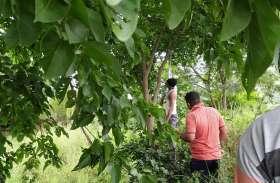 बहन की शादी के अगले दिन पेड़ पर लटका मिला युवक का शव
