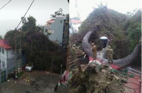 Video: अब नहीं दिखेगा सैकड़ों साल पुराना दुर्लभ पेड़ों का यह जोड़ा, बारिश ने पहुंचाया भारी नुकसान
