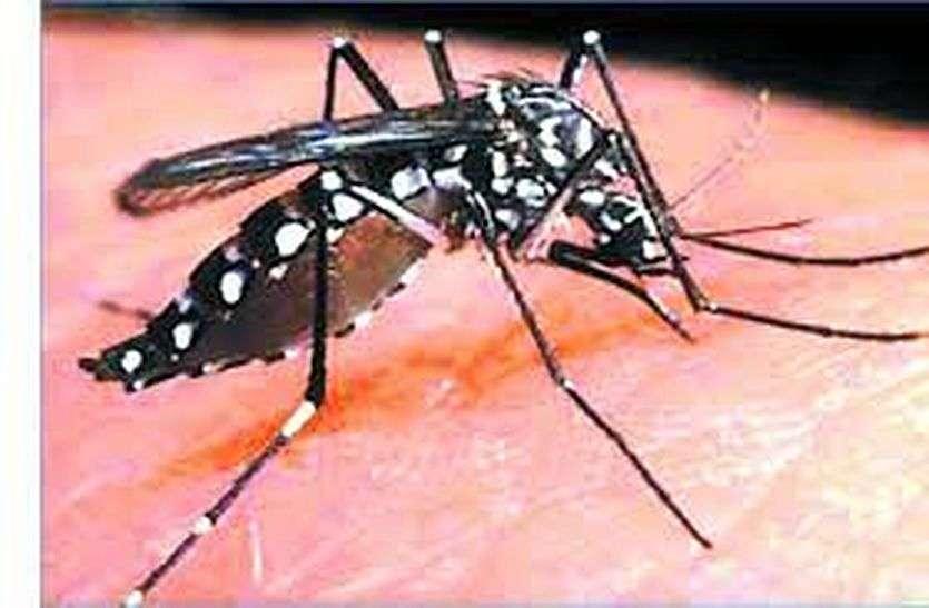 डेंगू अब यहां जानलेवा हो रहा, वायरल बुखार रोजाना पांच सौ को जकड़ रहा