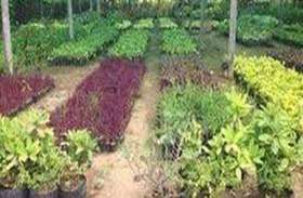 इस साल इन दो नर्सरियों में तैयार होंगे 2 लाख पौधे