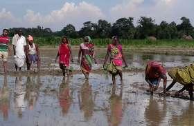 कम बारिश होने से पिछड़ रही खरीफ फसलों की बुवाई, अभी तक महज 30 फीसदी बोवनी