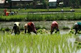खरीफ में मौसम मेहरबान तो सरकार दे रही किसानों को धोखा, समितियों से गायब हैं रसायन