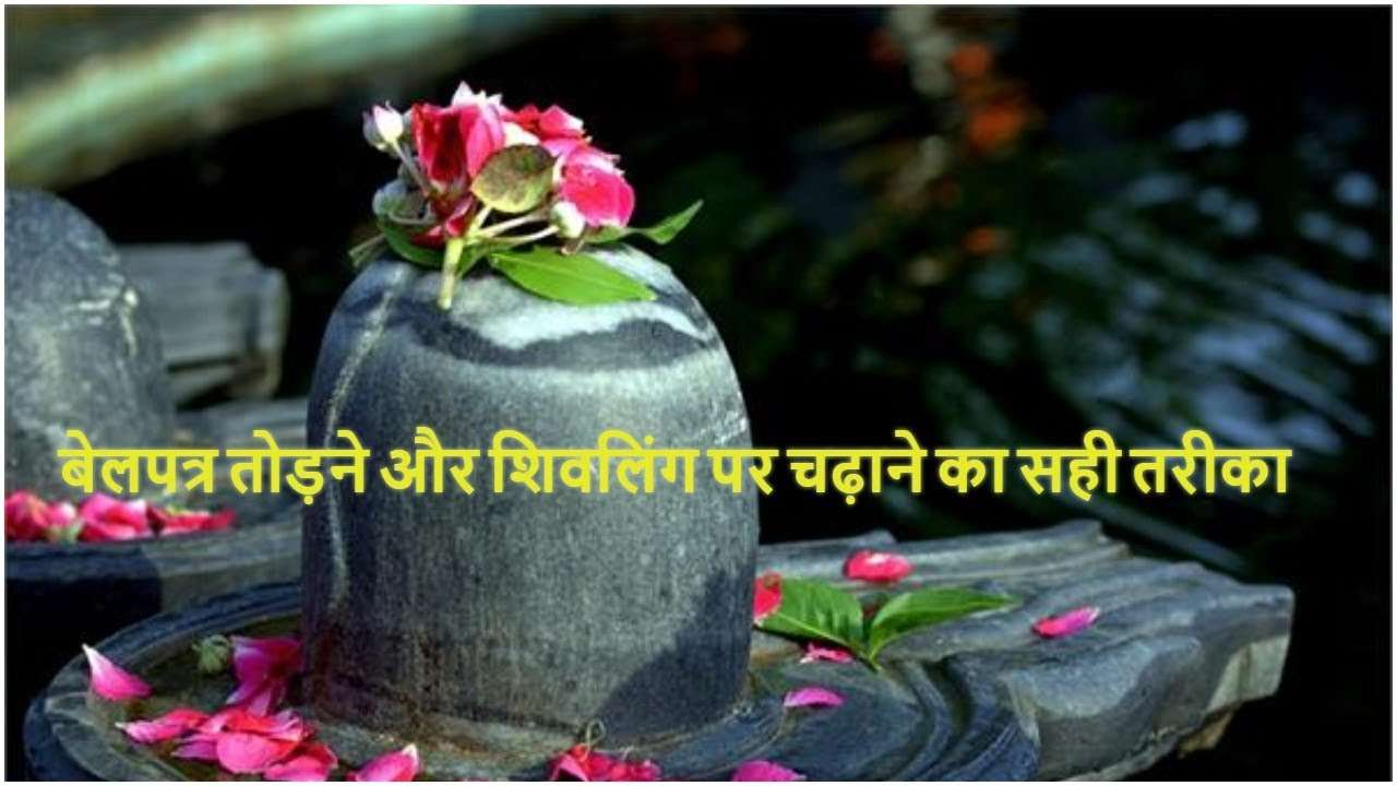 BELPATRA importance on lord shiv in sawan