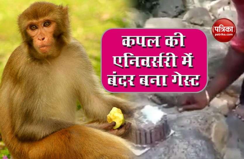 कपल के अरमानों पर बंदर ने फेरा पानी, जंगल में काट रहे थे एनिवर्सरी केक, तभी मारा झपट्टा
