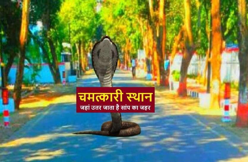 https://www.patrika.com/dharma-karma/misterious-places-snake-venom-gets-off-6211112/