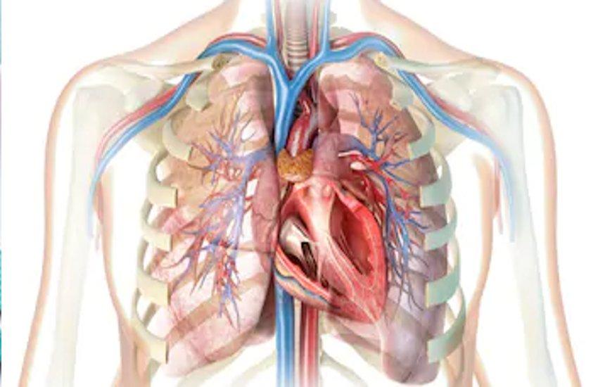 Kovid-19 Can Give Your Lungs A Never-ending Problem - आपके फेफड़ों को कभी न  ठीक होने वाली समस्या दे सकता है कोविड -19 | Patrika News