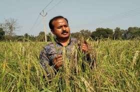 दुर्ग जिले के किसान का कमाल, जैविक खेती से पहली बार उगाया 100% रसायन मुक्त चावल, हैदराबाद की लैब ने किया प्रमाणित