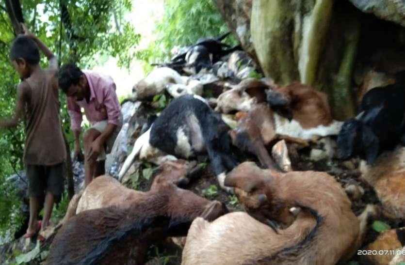 मौसम का मिजाज बिगड़ते ही आसमान से गिरी आफत, 20 बकरियों की मौत, बाल-बाल बचा युवक
