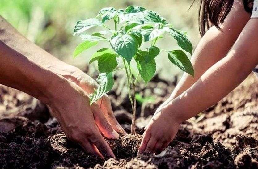 हरियाली का जुनून, 17 के लक्ष्य में तैयार कर दिए 20 लाख पौधे