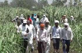 खेत में पहुंचे अधिकारी और ट्रैक्टर चलवाकर नष्ट करा दी फसल, किसानों ने जमकर किया प्रदर्शन