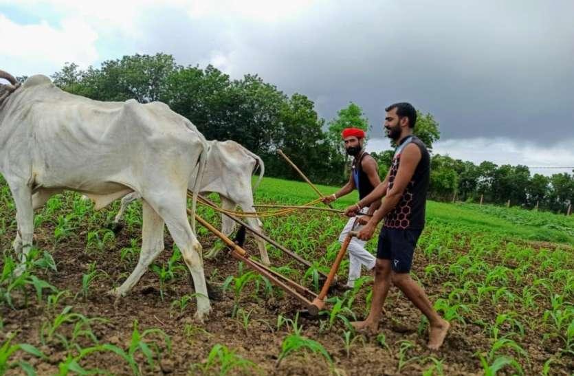 खरीफ खेती-2021: दो लाख 17 हजार हेक्टेयर में होगी बोवनी, धान का रखा गया सर्वाधिक लक्ष्य