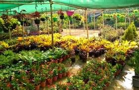 12 हजार पौधे लगाकर दिया हरियाली का संदेश