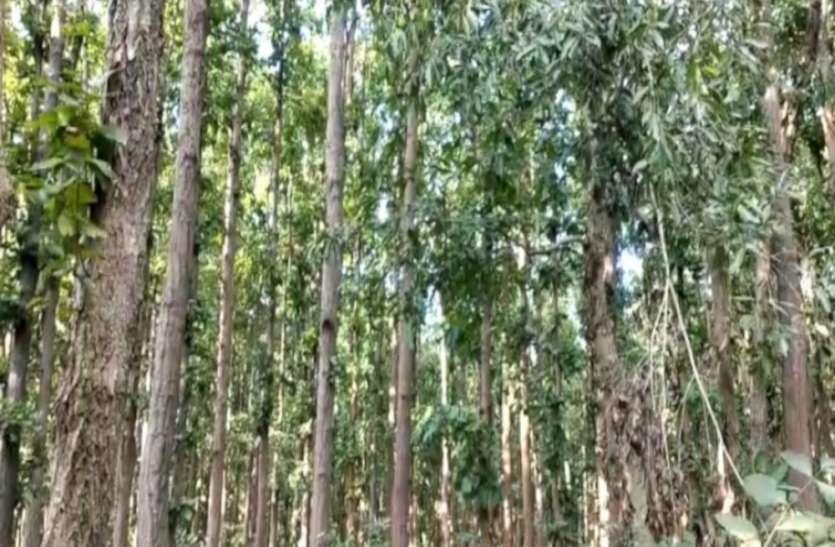 लॉक डाउन के दरमियान जंगल में बढ़ी शिकारियों की चहलकदमी, 3 शिफ्ट में होगी गश्त बढ़ेगे अस्थाई बैरियर