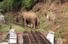 नीलगिरि माउंटेन रेलवे लाइन पर हाथियों का डेरा