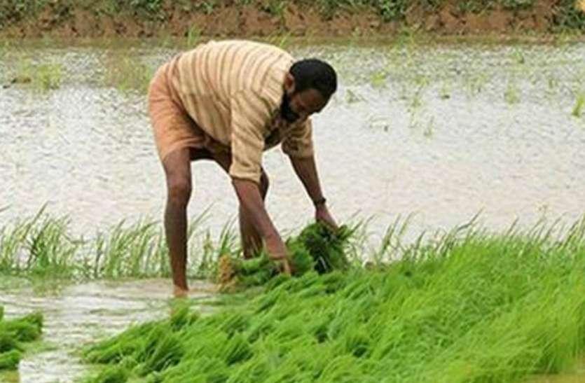 खरीफ फसल: अब तक 118 लाख हेक्टर क्षेत्र में फसलों की बुआई, किसानों को सलाह दे रहे हैं कृषि वैज्ञानिक