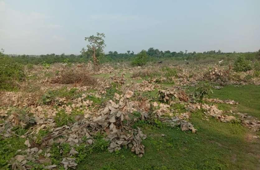 वन, राजस्व व ट्राइबल के बीच फंसे दो हजार से अधिक वनाधिकार दावे