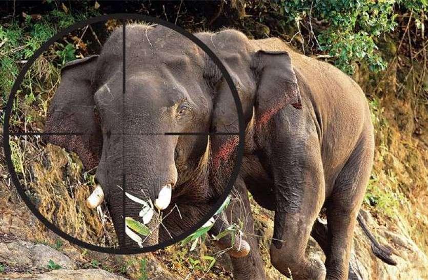 खुलासा: लॉकडाउन में ज्यादा हुआ हाथियों का शिकार, जानिए क्यों