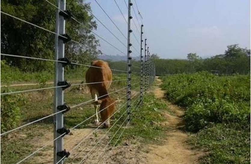 खेतों की सुरक्षा में लगाया गया लेजर वायर कर रहा पशुओं को घायल